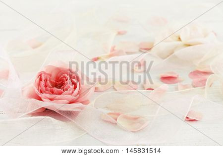 Delicate festive background. Rose, petals, ribbons. Soft focus on flower, dreamy pastel tones.