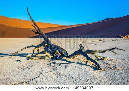 The bottom of dried lake Deadvlei. Orange dune and dried trees. Ecotourism in Namib-Naukluft National Park, Namibia
