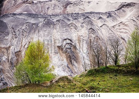 young birch trees on the edge of the pit from lignite (brown coal) opencast mining with destroyed layer of soil and landslides a significant intervention in nature and the environment