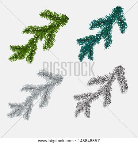 Set of fir, pine branches isolated on white background. Vector illustration
