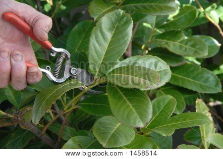 Spring Pruning