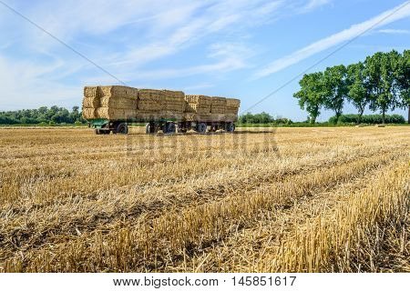 Agricultural trailers fully loaded with piled straw bales in a wheat stubble field ready for transport to the farm. It's a sunny day in the summer season.