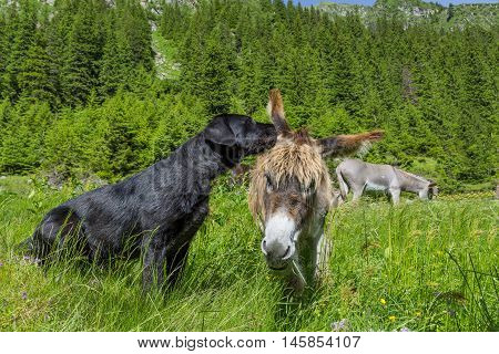 Dog whispering secrets his donkey friend, close up. Love story. Multicultural friendship stories.