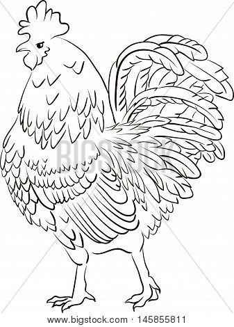 Hand drawn line art black and white sketch of a cartoon cock on a white background
