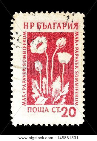 BULGARIA - CIRCA 1953 : Cancelled postage stamp printed by Bulgaria, that shows Poppy.