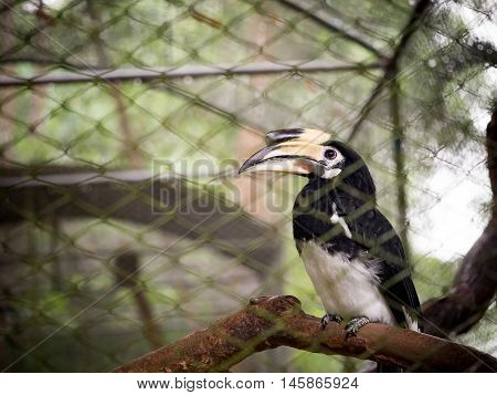 Soft focus hornbill bird wildlife animal in cage at zoo in Thailand.