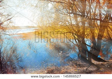 Colored autumn landscape- yellow autumn willow under sunshine on river bank at autumn sunset. Autumn rural landscape with picturesque autumn nature and autumn trees near river. Autumn landscape view.