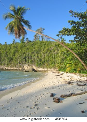 Palm Tree Over A Tropical Beach, Togians Island, Sulawesi, Indonesia