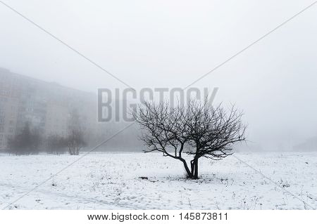 One tree standing in the middle of the field. All around in the fog. Against the background is gray building