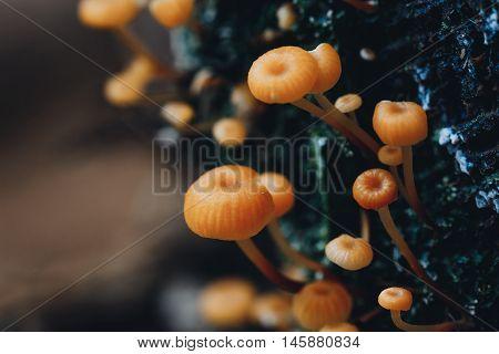 Orange Toadstool In Nature
