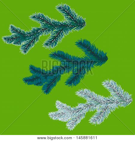 A set of blue spruce branches. Christmas tree - a symbol. The branches of spruce in frost. illustration