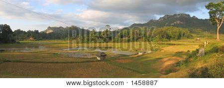 Ricefields From Londa To Kete Kesu, Rantepao, Sulawesi Island, Indonesia, Panorama
