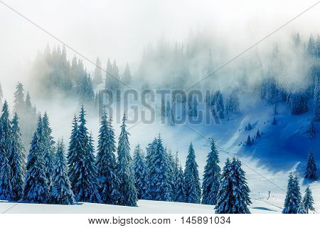 Beautiful mountain snowy landscape and snow covered trees