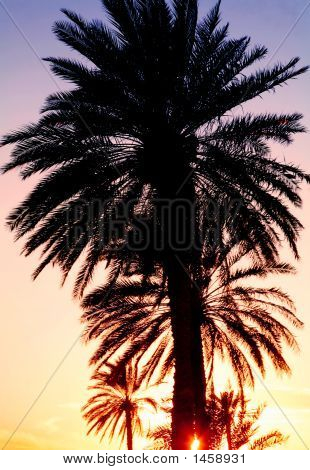 Sunset Behind The Palms