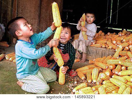 MOC CHAU, VIETNAM, August 28, 2016 Children's groups, ethnic Hmong, highland Moc Chau, Son La, Vietnam, playful side of the pile of corn