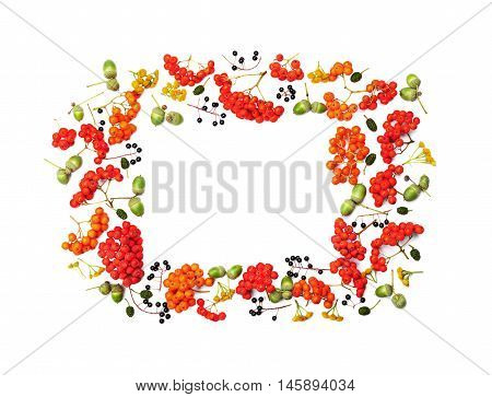Autumn frame from rowan acorns flowers and various fruits isolated on white background overhead view. Flat lay styling.
