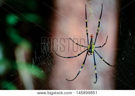 Spider perched on the cobweb in the forest.