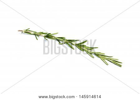 Fresh green sprig of rosemary isolated on a white background