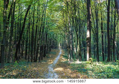 Autumn deciduous forest on a sunny day.