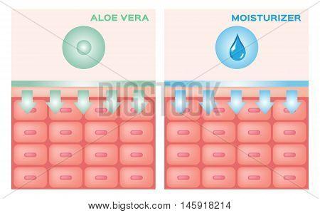 aloe vera and moisturizer apply on skin vector , pink skin anatomy