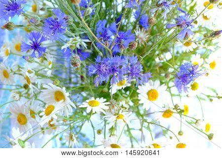 Daisies And Cornflowers