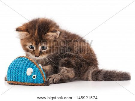 Cute fluffy kitten caught toy mouse isolated on white background