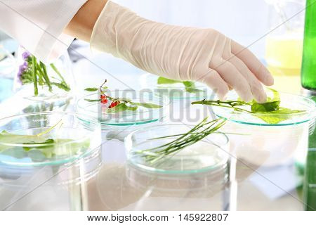 Genetically modified plants.Biotechnologist examine the plant samples in the laboratory