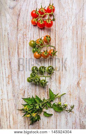 Cherry Tomato Ripening Phases