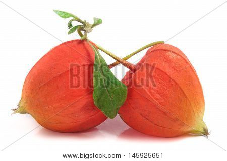 two closed physalis or husk tomatoes with leaf isolated on white background.