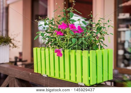 Red flowers in a green pot on a similar fence on the windowsill