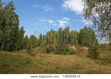 Birch trees in a ravine against the backdrop of blue sky with clouds.