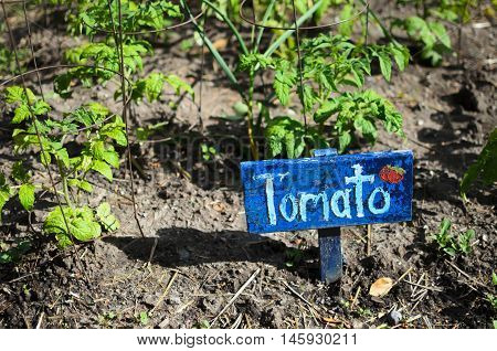 Rustic hand-made painted wooden Tomato sign next to young tomato plants