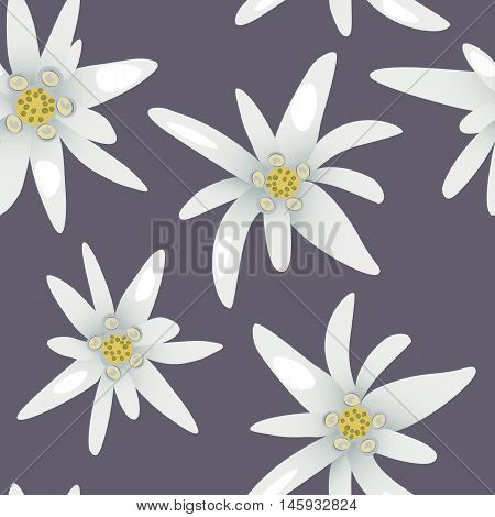 Seamless pattern with alpine edelweiss flowers.Vector illustration