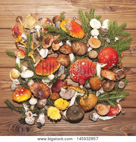 Assorted colorful mushrooms on a wooden background