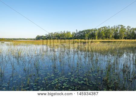 Peaceful View of a Marsh Area with Trees and Tall Grass