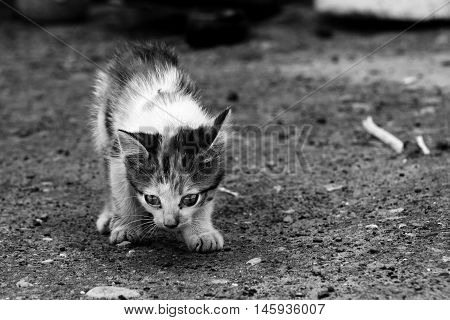 Little kitten looking for a home.  Black and white photo