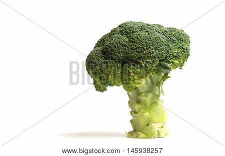 Tree of broccoli on white background close up