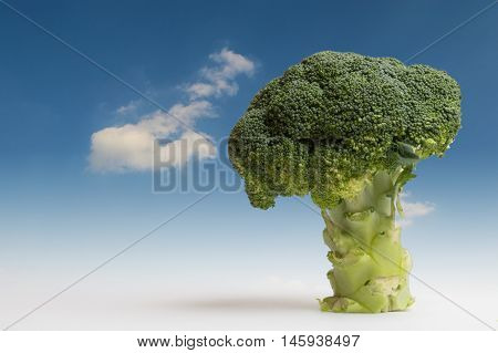 Tree of broccoli. Fantasy Landscape, close up