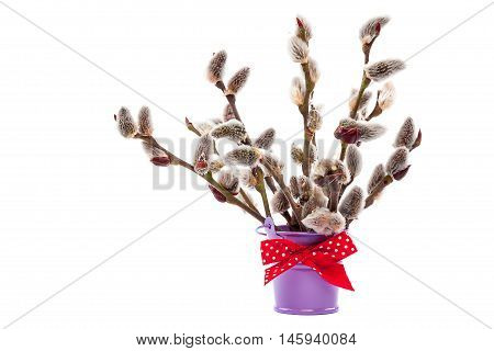 Branches of willow blossoming in a bucket with a red ribbon isolated on white background.