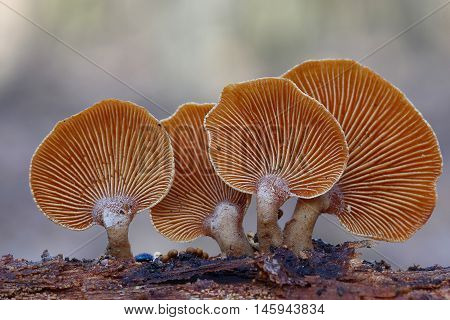 fungi, mushroom, brown, nature, autumn, spring, wood, forest, group