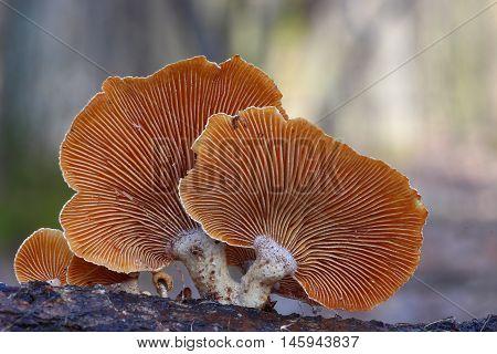 fungi, mushroom, brown, nature wood, autumn, spring, wood, forest