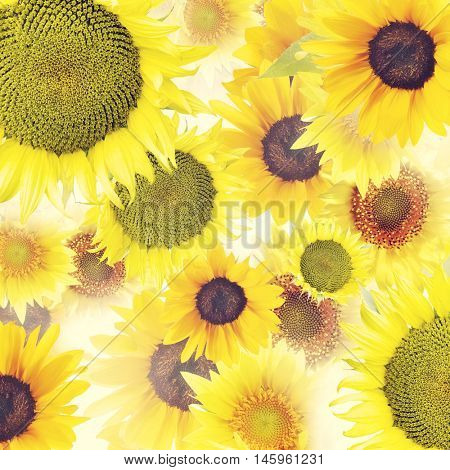 Sunflowers , close up for background