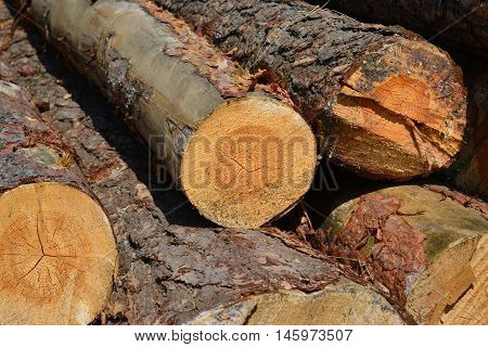 Sawlogs to produce a general purpose lumber