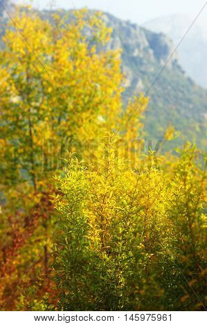 Autumn trees in the background of a mountain slope