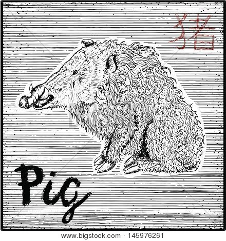 Engraved illustration of zodiac symbol with Pig or Boar and lettering. Horoscope and astrological vector sign of asian new year calendar. Graphic line art with animal. Chinese hieroglyph means Pig