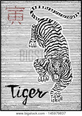 Engraved illustration of zodiac symbol with Tiger and lettering. Horoscope and astrological vector sign of asian new year calendar. Graphic line art with animal. Chinese hieroglyph means Tiger