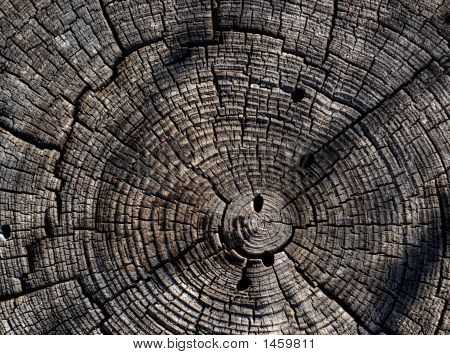 Tree Rings In Old Stump