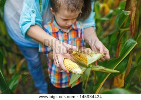 Mother teaching her son how to clean corn in a corn field