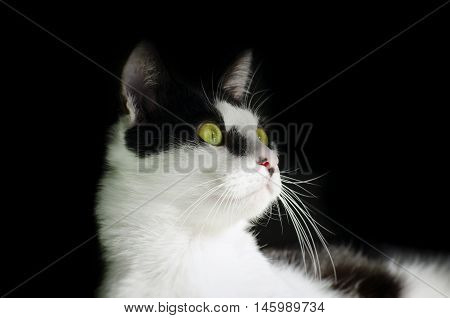 Photo of Funny Single Cat With Green Eyes