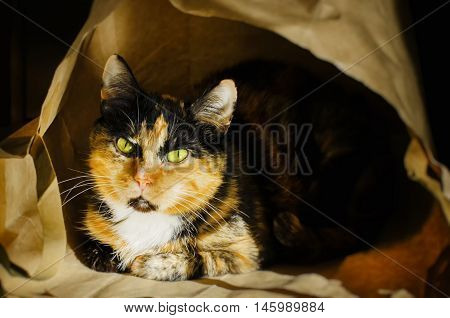Photo of Funny Single Cat in Paper bag